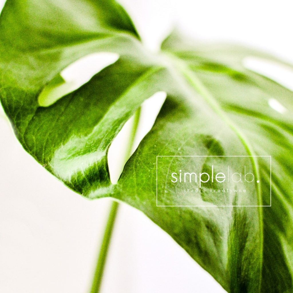 simple lab_foto_monstera (Kopiowanie)